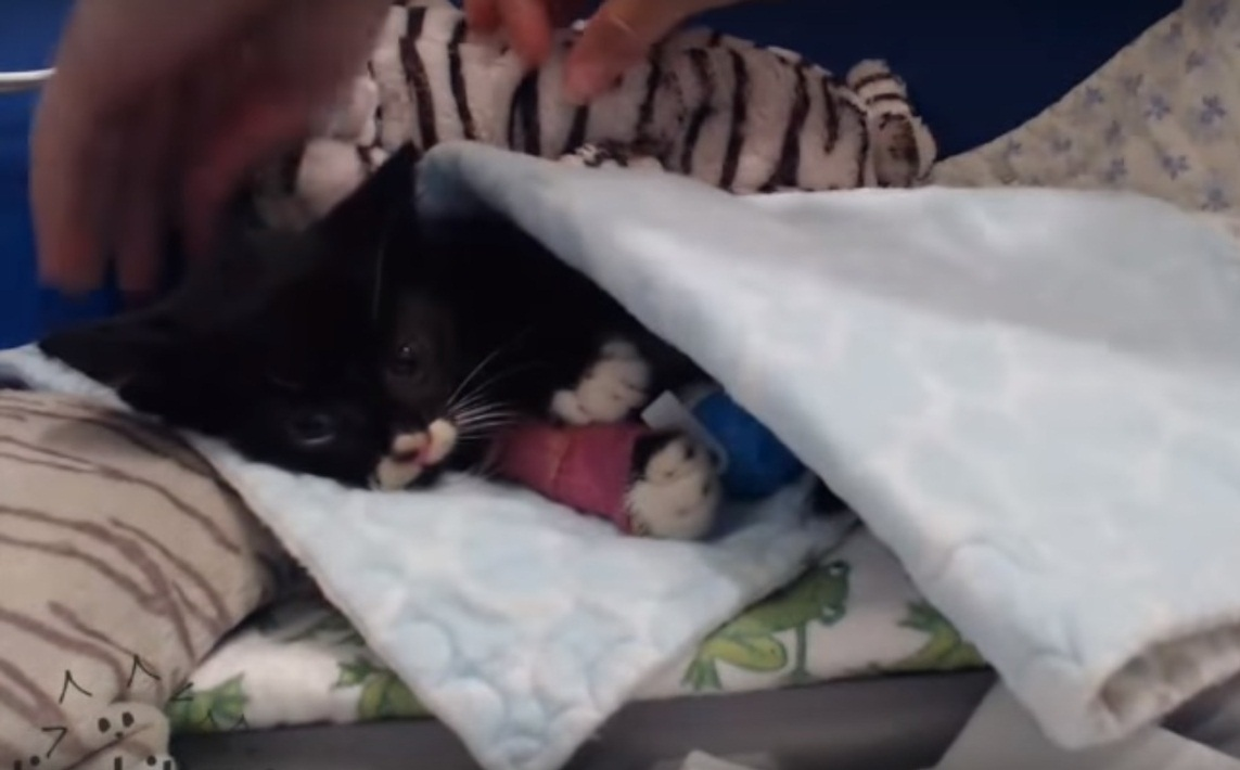 Rescuing Miracle Kitten Cassidy