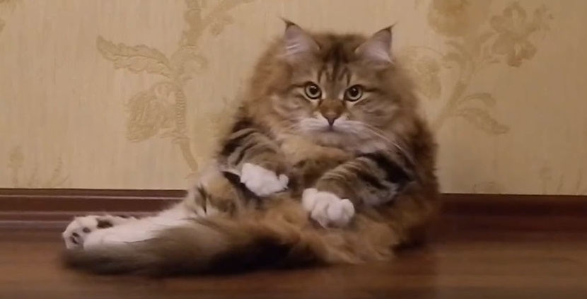 Cat Massaging Itself