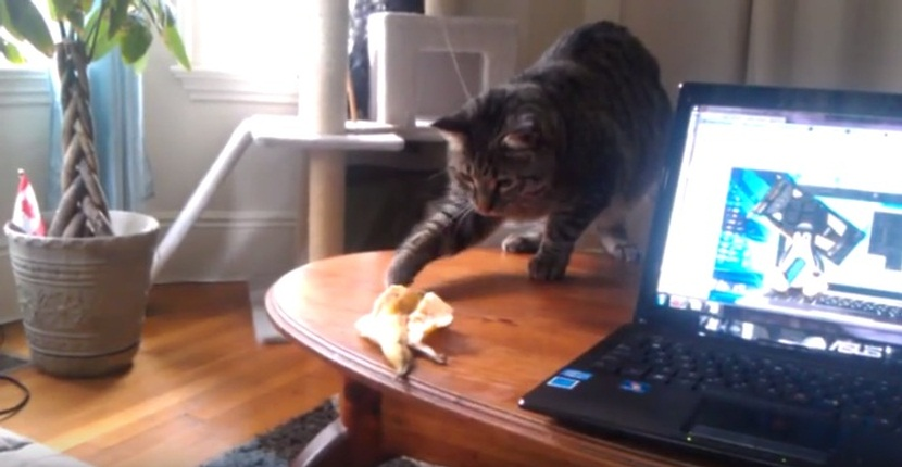 Cat Vs Banana Peel
