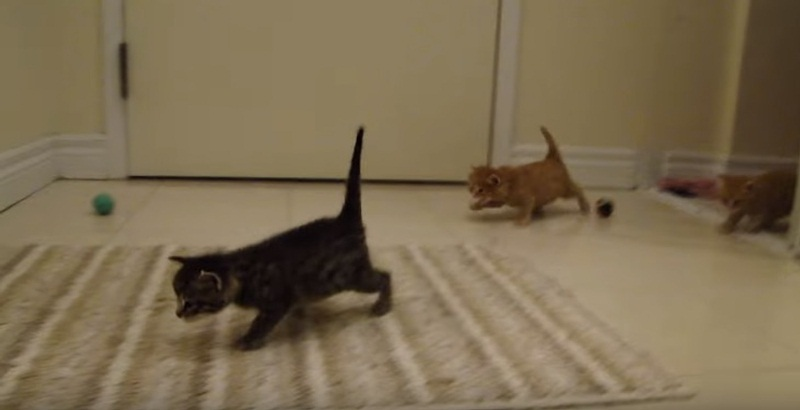 Cute Kitten Invasion