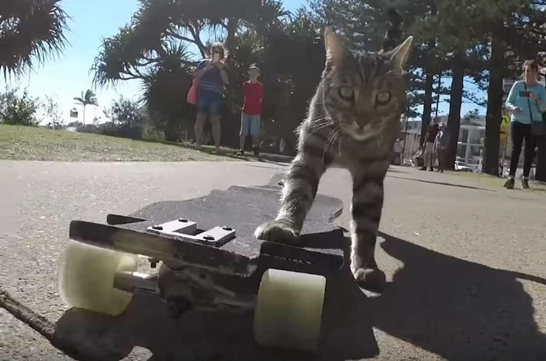 Didga and Boomer, the skateboarding cats