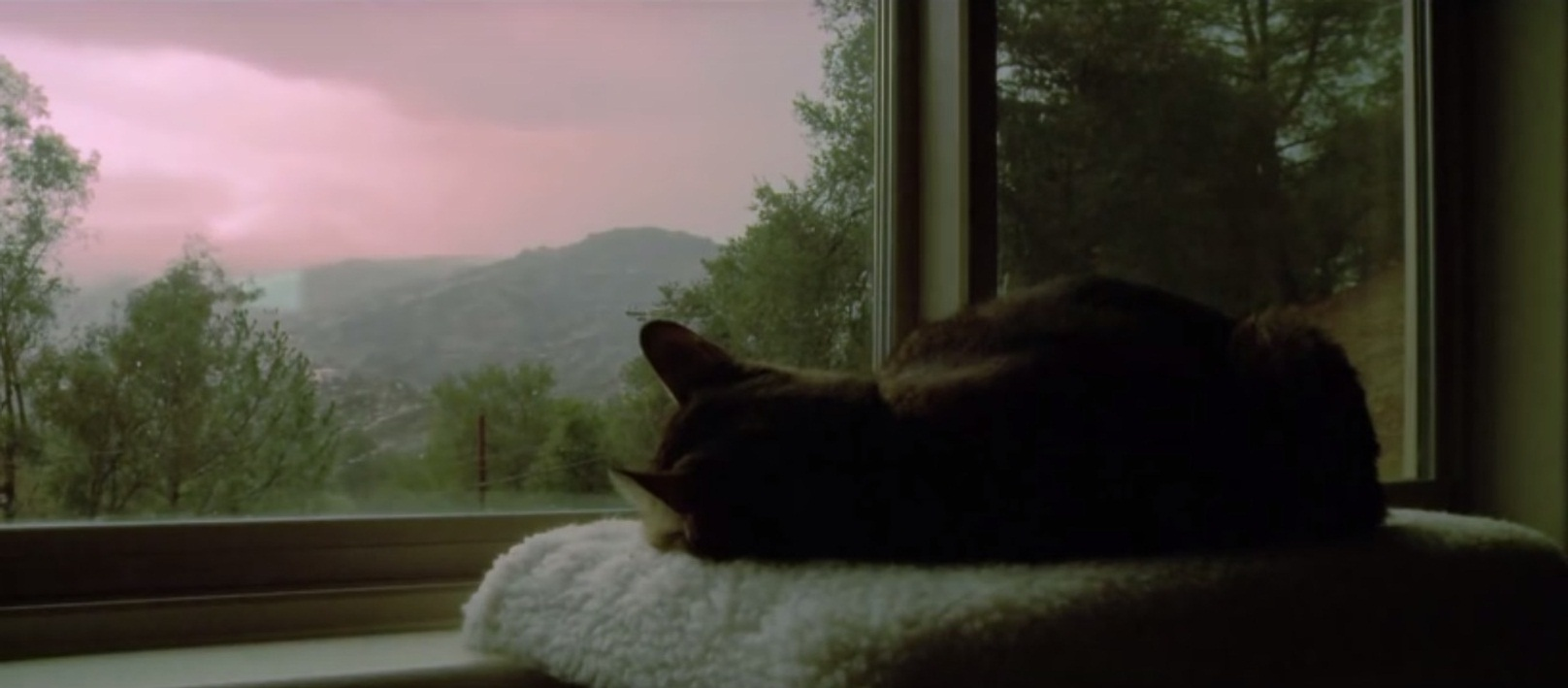 A peaceful time-lapse video of a cat sleeping through storm