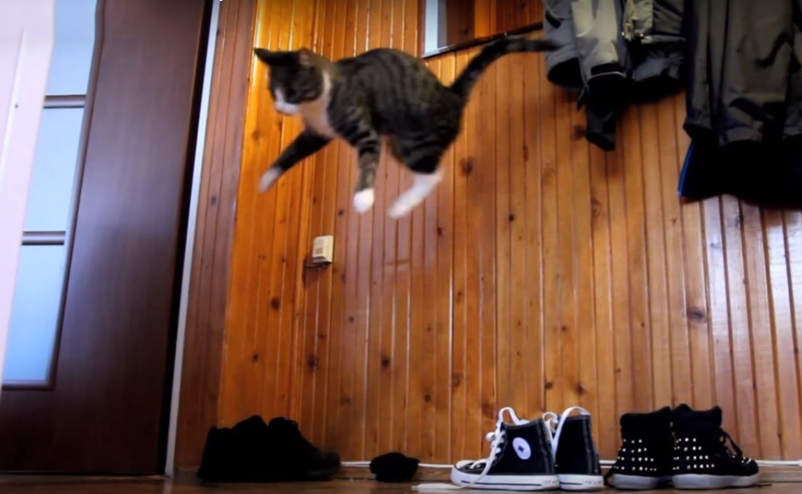 Crazy Parkour Cat Performing Some Insane Jumps