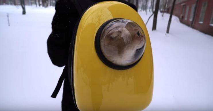 Hosico The Astronaut Cat