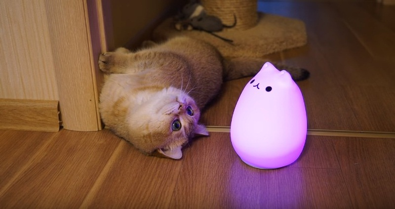 Meet Hosico And His Lamp