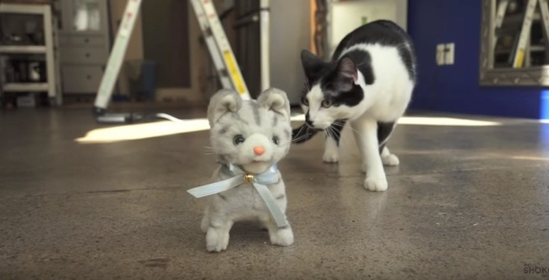 Funny Cat Walking Toy Kitten