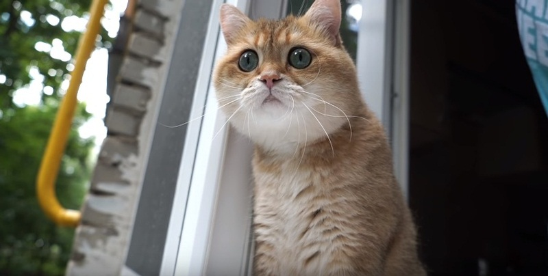 A Beautiful Morning With Hosico