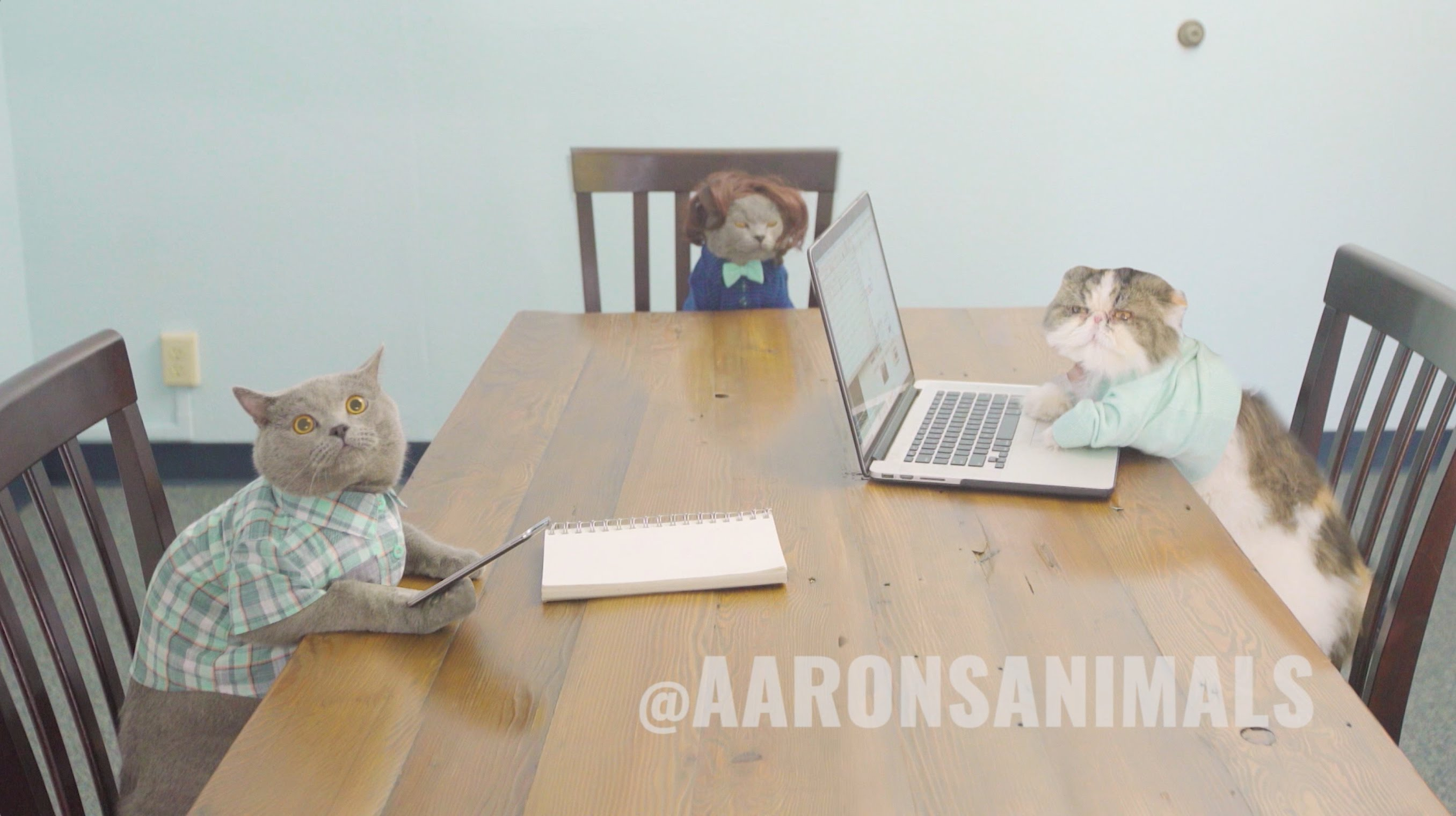 When cats have a meeting in the workplace - Aaron's Animals