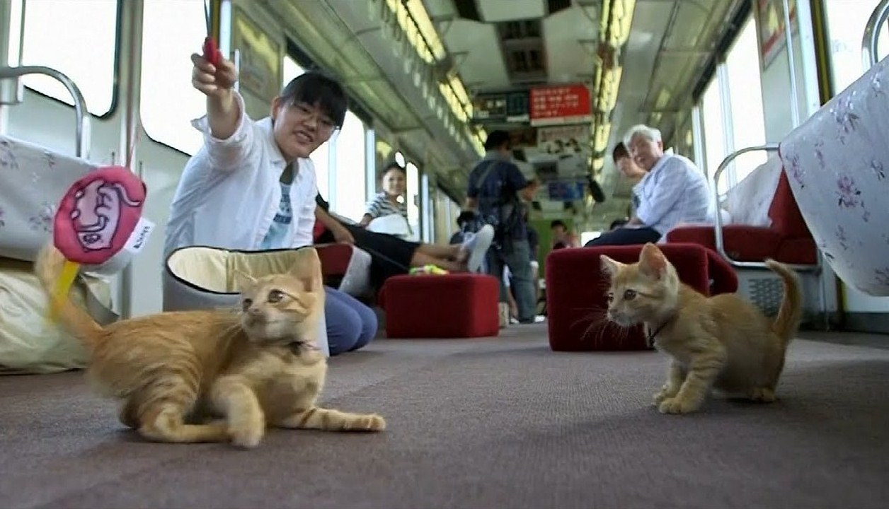 Cat cafe on a moving train in Japan