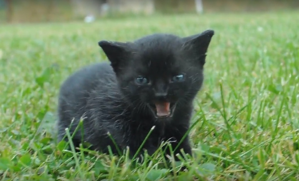 Black kitten experiences grass for the first time