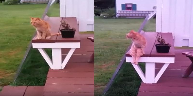 Weird Cat Sits Like A Human