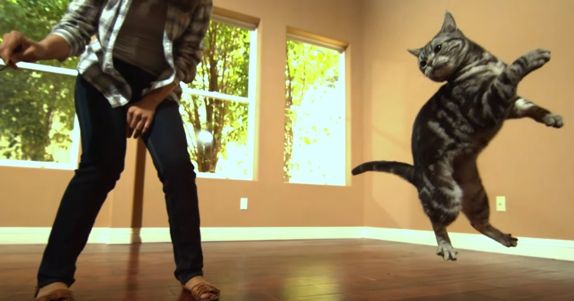 Wonderful Video Of Cats Playing In Slow Motion