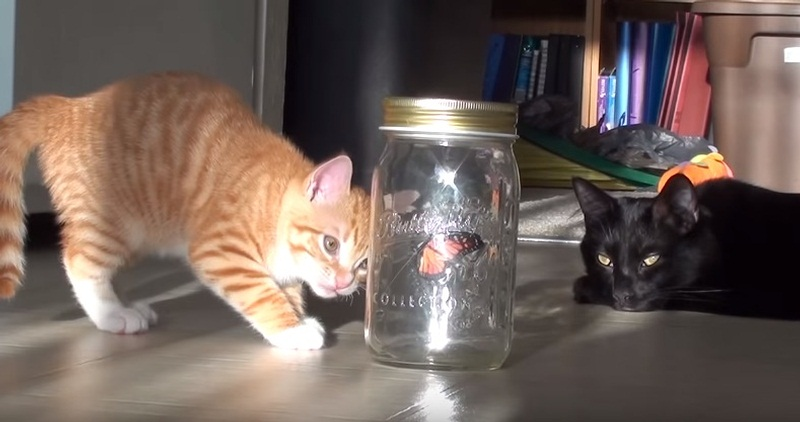 Cute Cats Vs Fake Butterfly