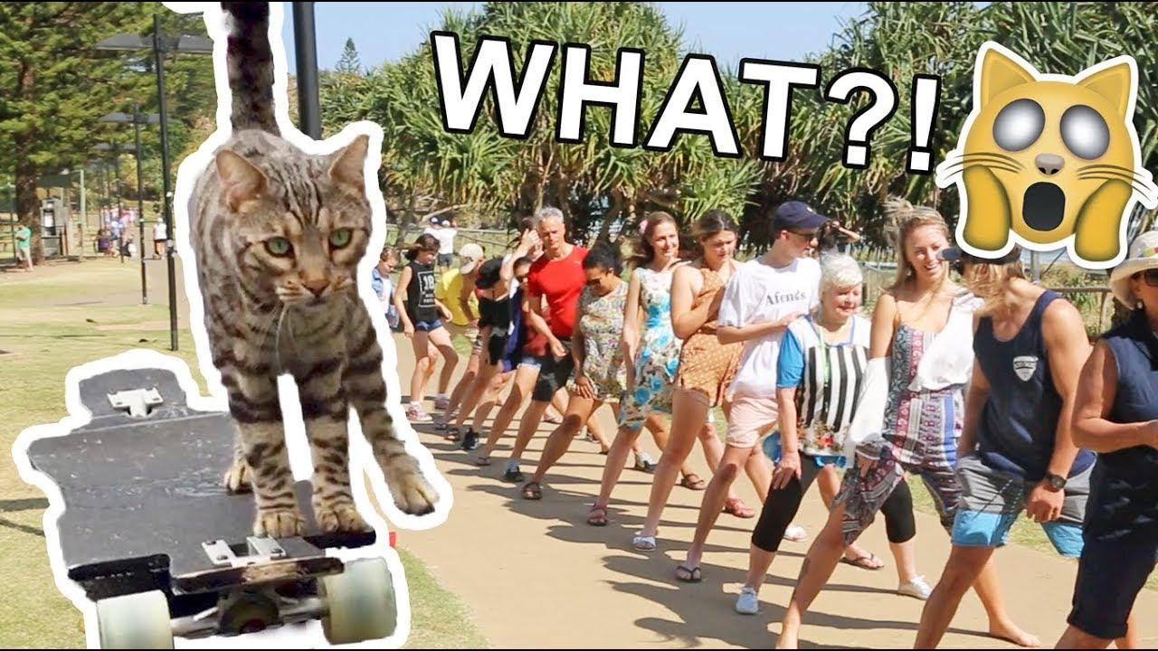 Boomer The Skateboarding Cat Breaks WORLD RECORD