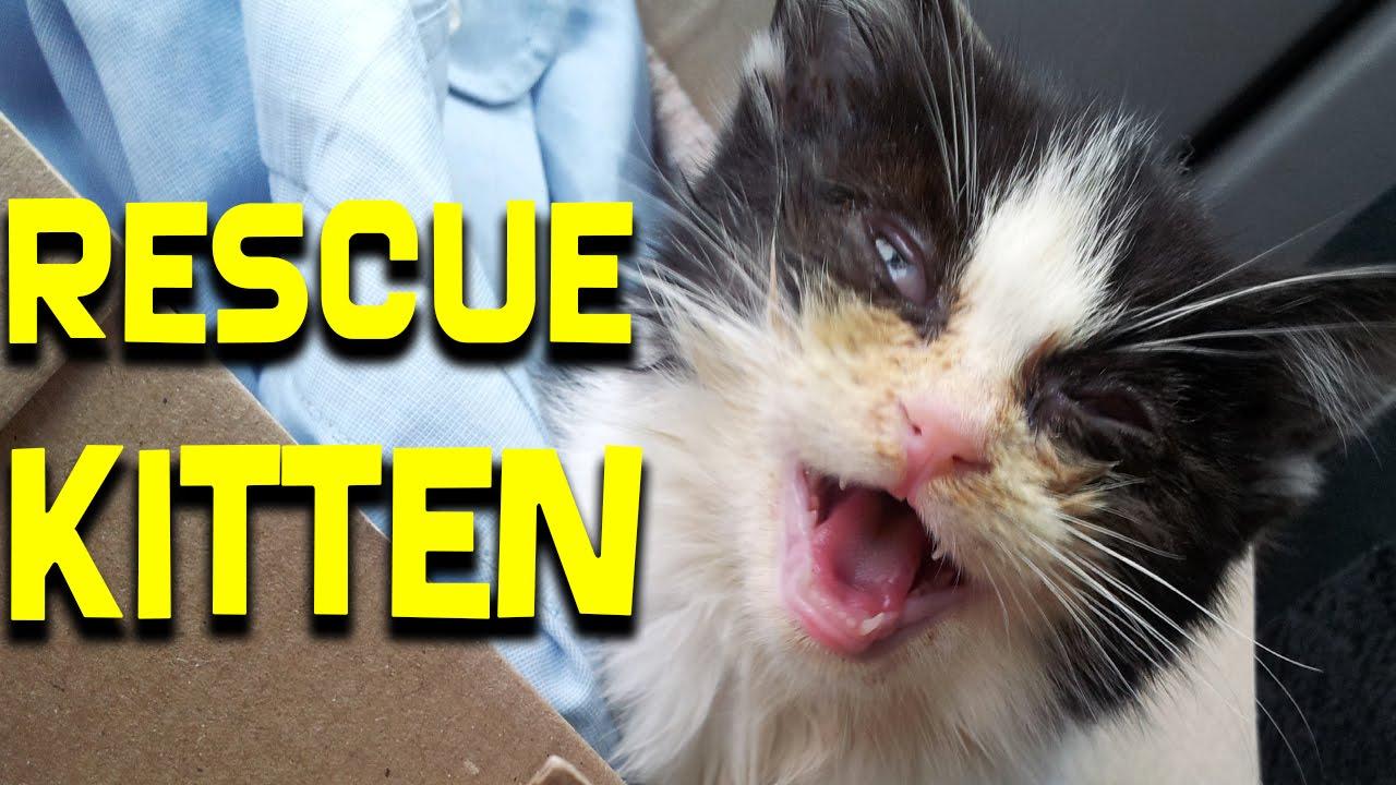 Saving The Abandoned Kitten - Pusic