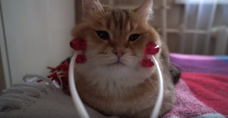 Hosico Getting A Purrfect Massage