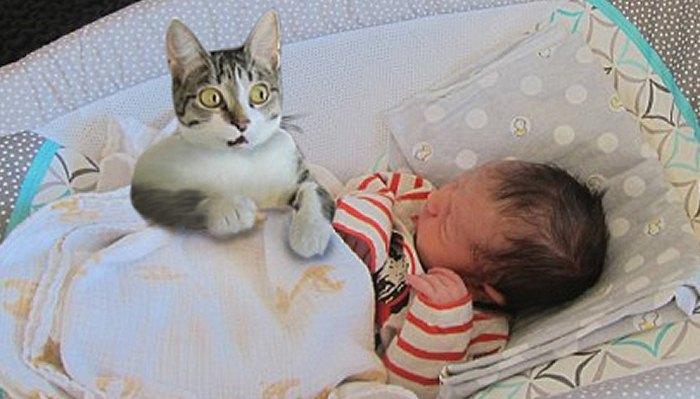 Funny Curious Cats Meeting Newborn Babies