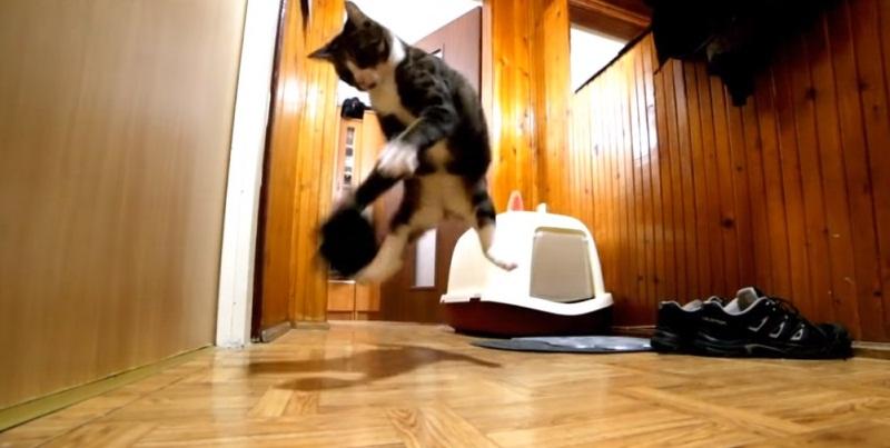 Hidden Camera And Nikita Cat