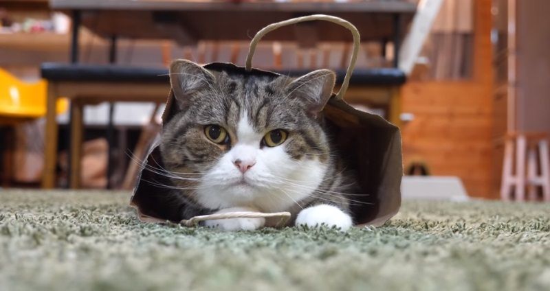 After All Maru Decides To Wear The Bag