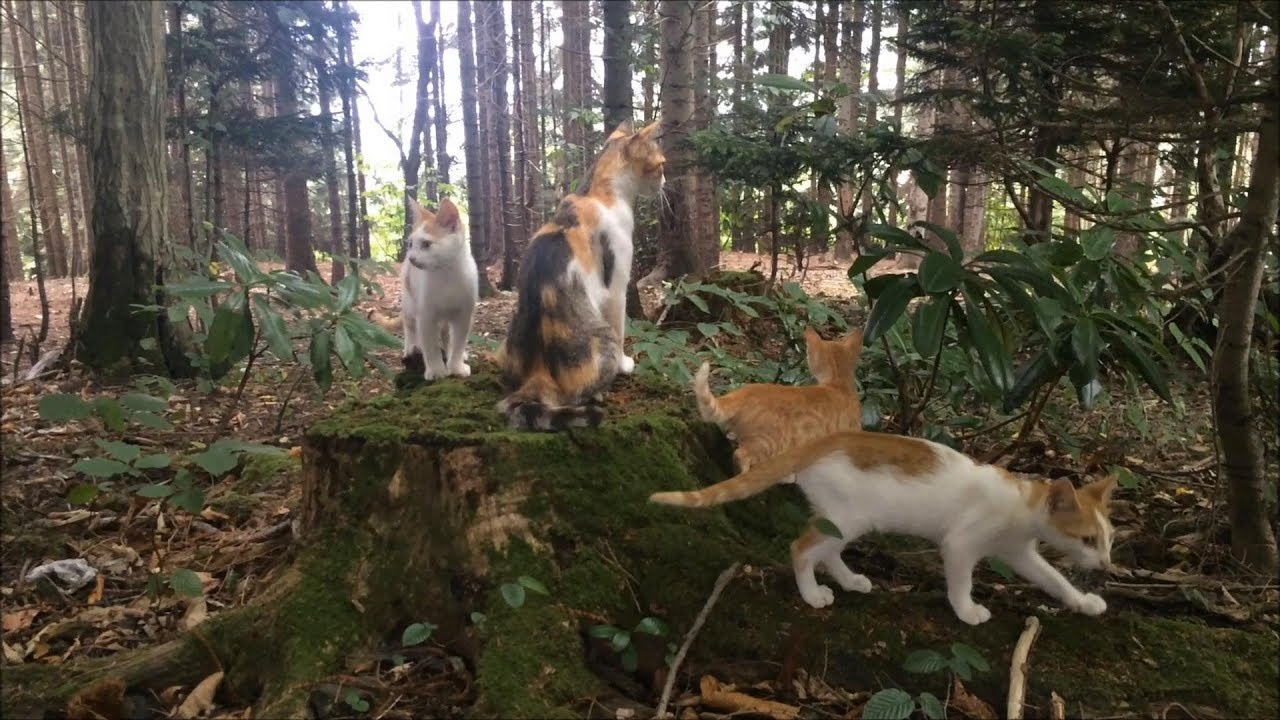 Kittens having fun in the woods