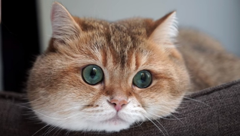 Hosico Relaxing By The Window