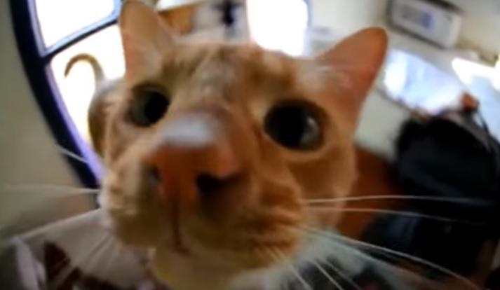 Cute Cats Saying