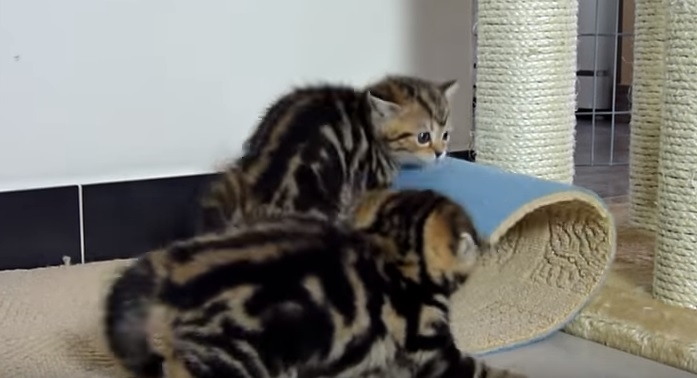 Ninja Kittens In Action