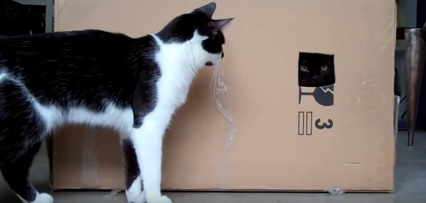 The Box - The Most Fun Toy For Cats