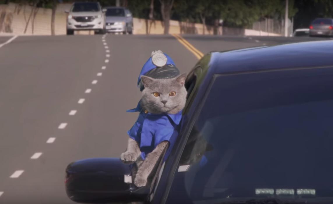 Insane Cat Cop Chase (Aaron's Animals)