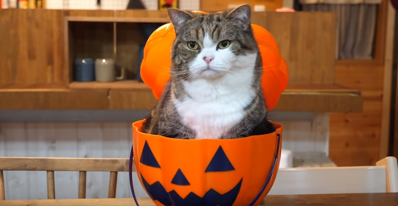 Maru Is Ready For Halloween