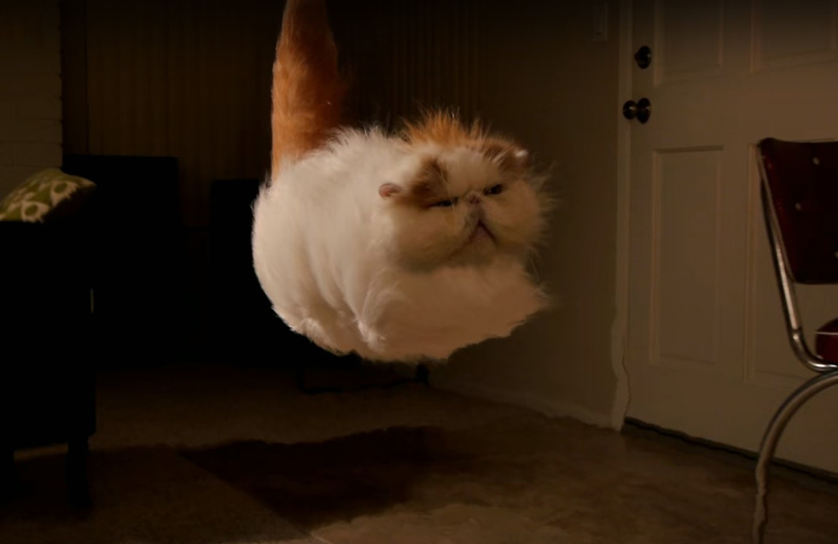 The Amazing Hover Cat