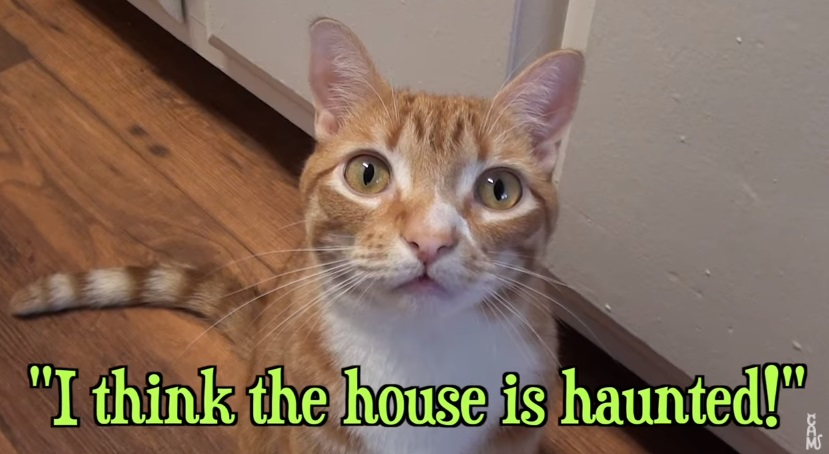 A Cat's Guide To Halloween