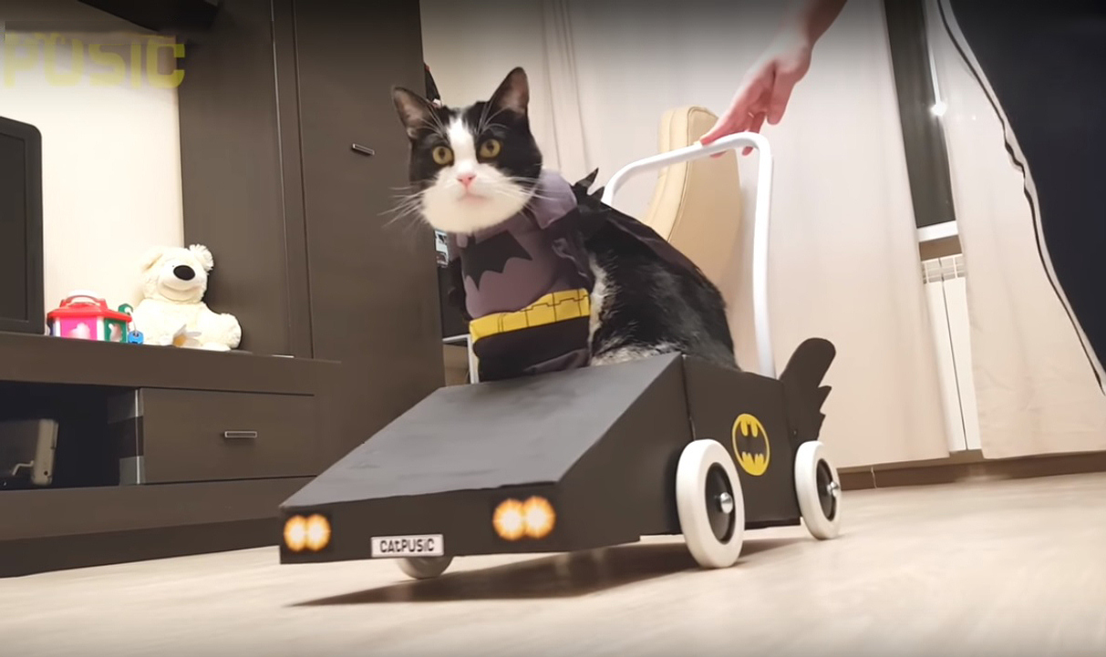 Building a BATMOBILE for Batcat Pusic
