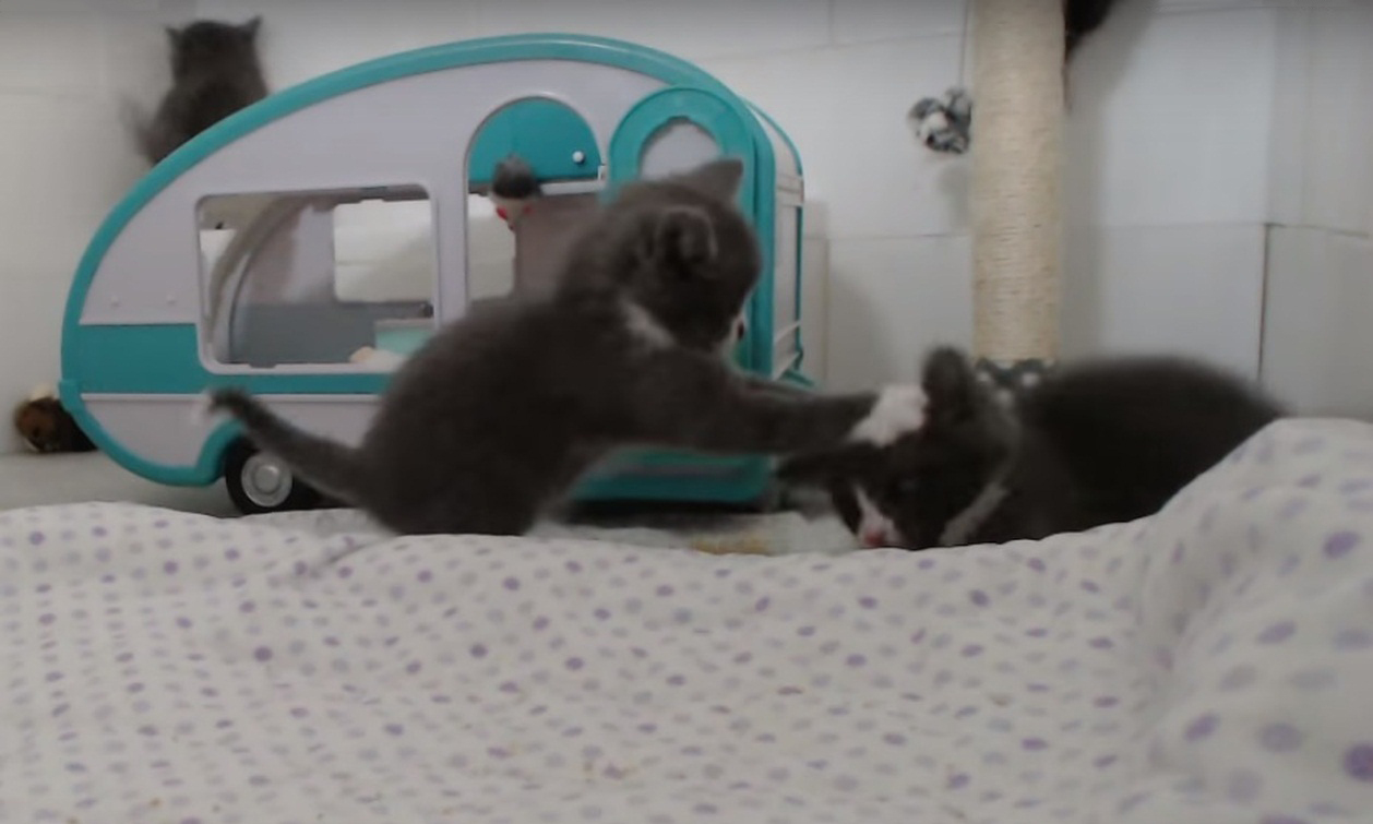 Intense MMA Fight With Kittens!