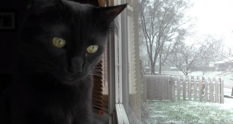 A Cat's Guide To Winter