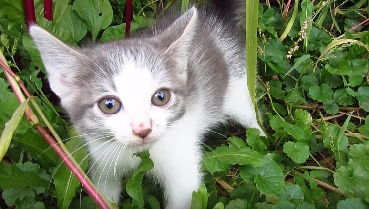 Encounter With Ferocious Kitten