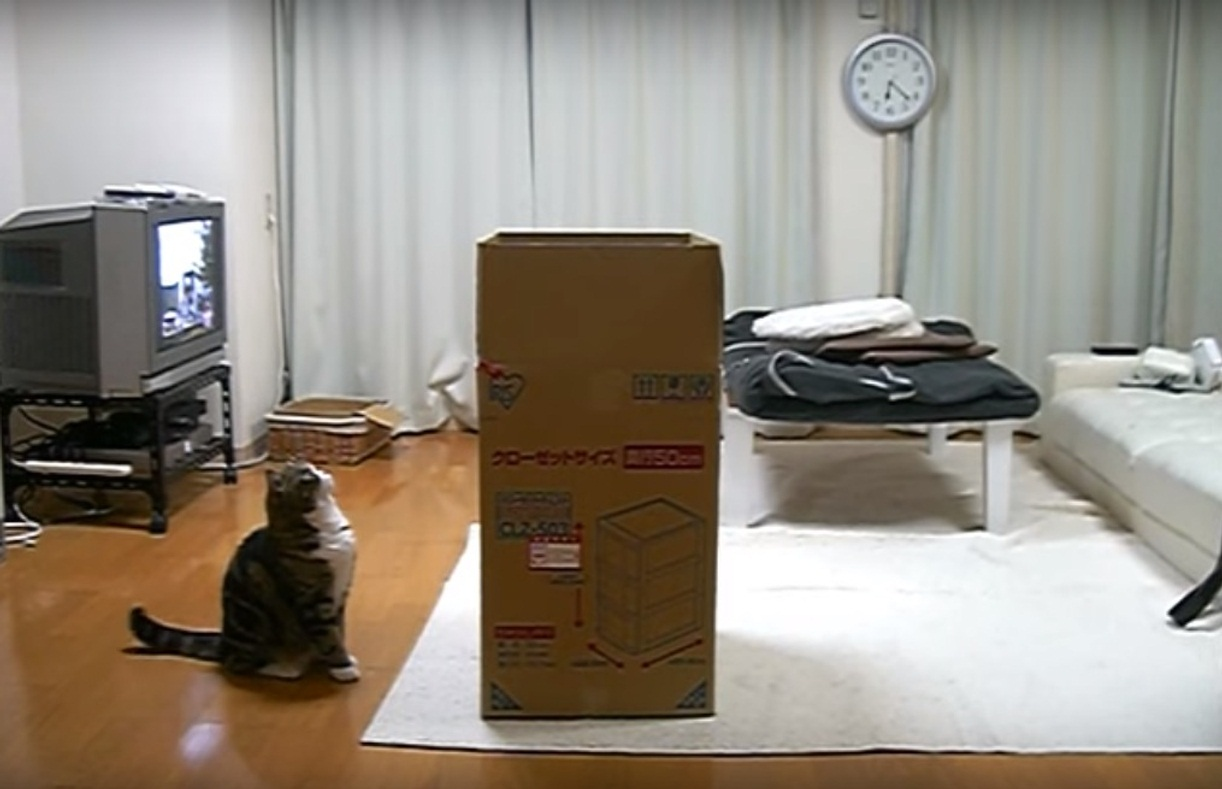 Maru and a big box