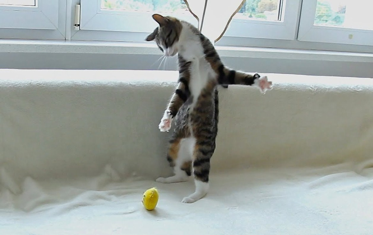 This cat has some crazy moves!