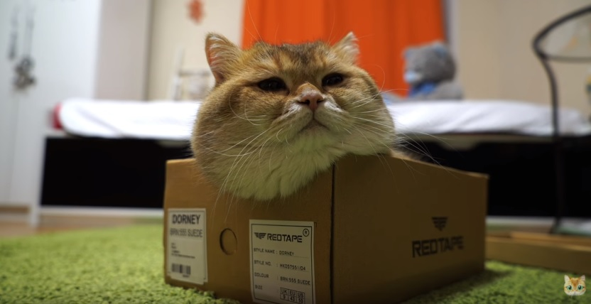 Hosico Got A New Box