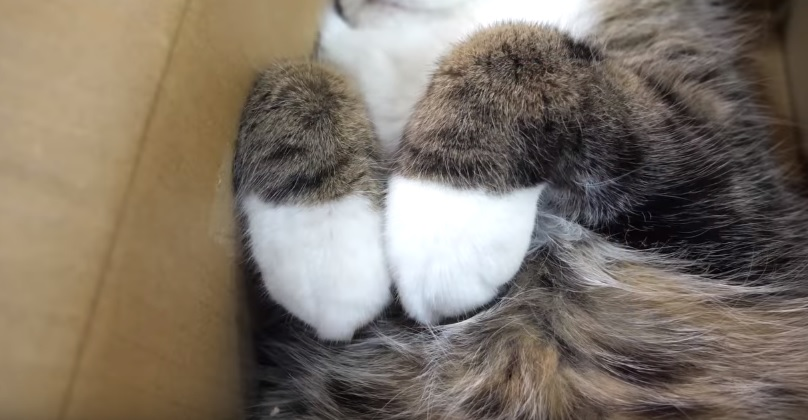 Maru Relaxing In His Box