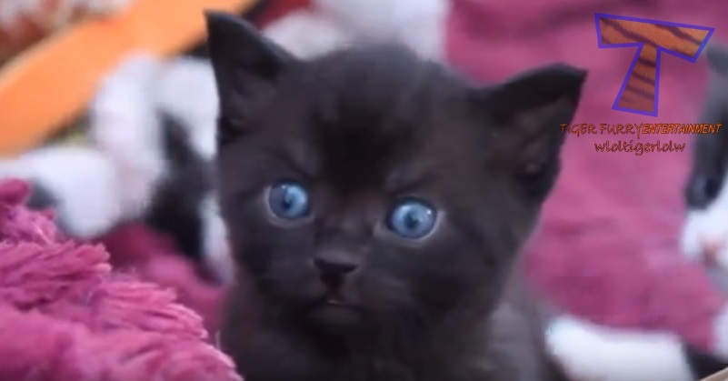 Cutest Kittens Compilation