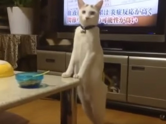 Strange Cat Walking Backwards