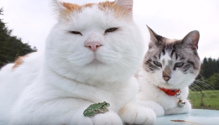 Two Cats And A Frog Relaxing