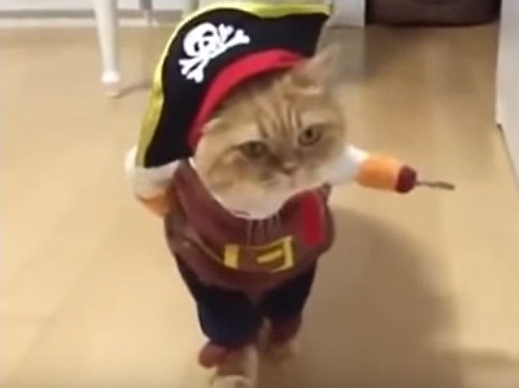 Funny Cat In Pirate Costume