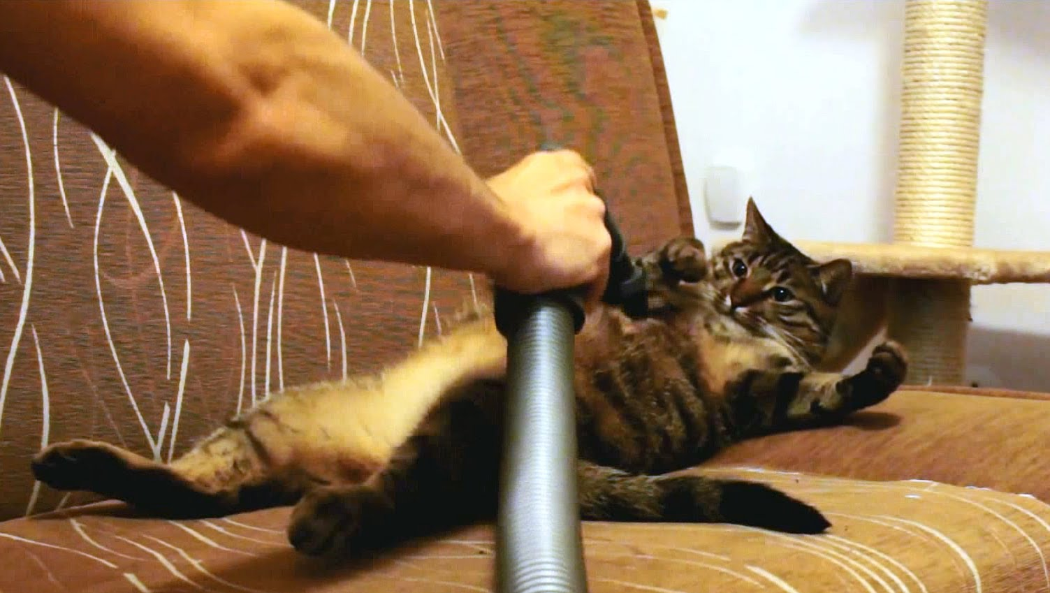 This kitty loves to be vacuumed