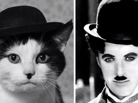 Funny Cats That Look Like Other Things