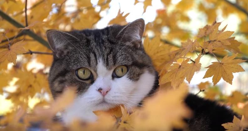 Maru And Hanna In Autumn