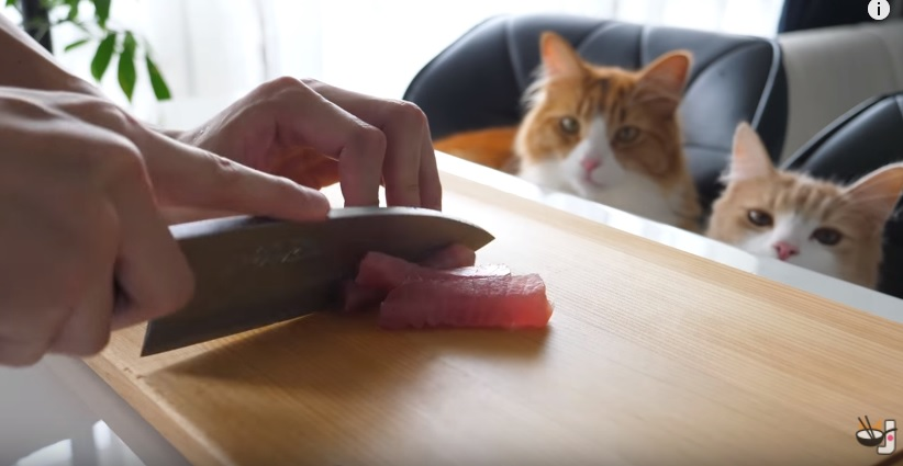 Awesome Guy Cooks Sushi For His Cats