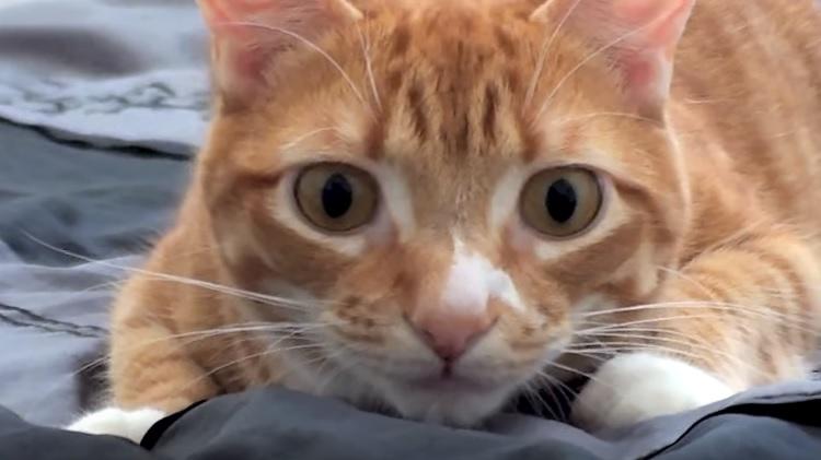 Marmalade's Crazy Eyes