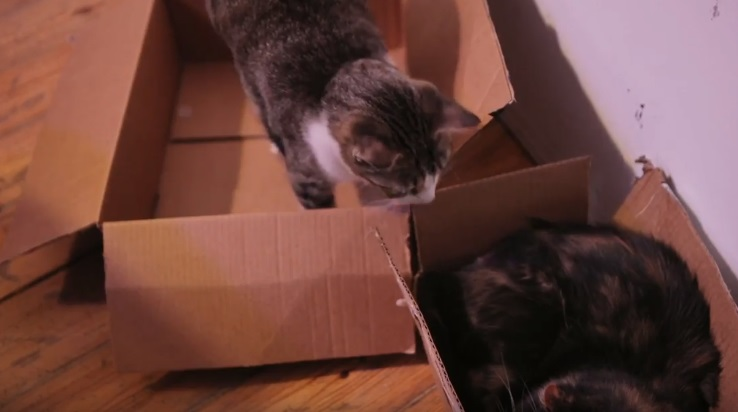 2 Cats And 2 Boxes